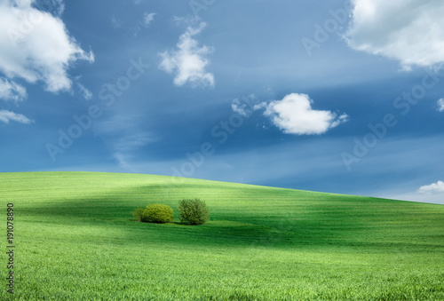 Foto op Plexiglas Cultuur Field and sky. Agricultural landscape in the summer time