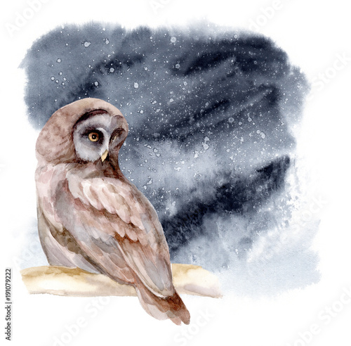 Photo Stands Owls cartoon Watercolor illustration. The owl sits on a branch of tree. Night forest landscape.