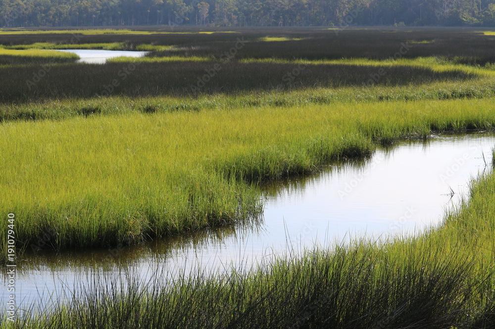 Mill Cove Wetlands, Jacksonville 03