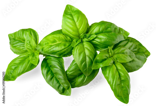 Canvastavla closeup of fresh basil isolated on white