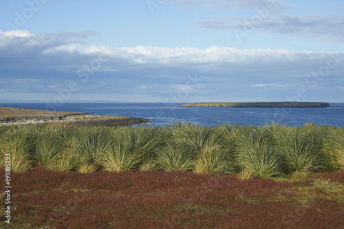 Fototapeta Colourfully grasses growing alongside tussock grass on Bleaker Island in the Falkland Islands