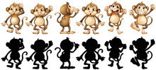 Monkeys And Its Silhouette In ...