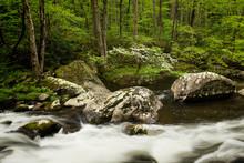 Dogwood Stream