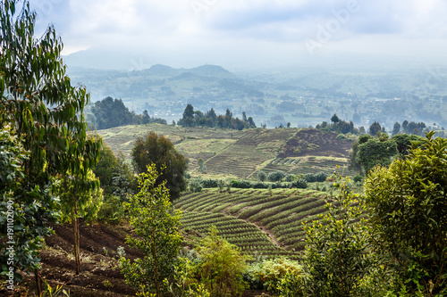Tuinposter Blauwe hemel Green farmland fields landscape in Virunga volcano national park, Rwanda