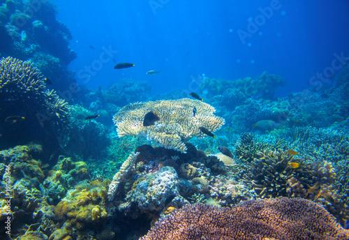Plakat Tropikalna laguna Podwodny krajobraz. Rafa koralowa panorama w otwartej wodzie morskiej.