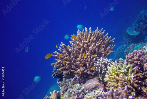Plakat Tropikalne wybrzeże podwodne krajobrazu. Rafa koralowa ściana w otwartej wodzie morskiej.