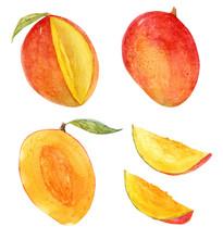 Watercolor Mango Set