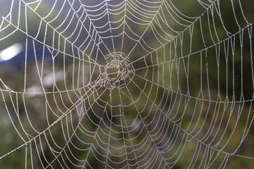 web dew spider trap texture