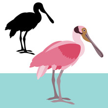 Roseate Spoonbill Vector Illustration Flat Style Black Silhouette