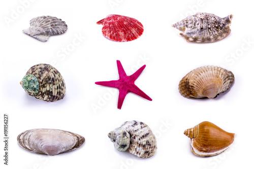 Muschel- und Seestern Set