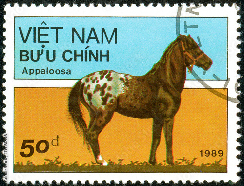 Fotografia, Obraz  Ukraine - circa 2018: A postage stamp printed in Vietnam show horse of the breed Appaloosa or Equus ferus caballus