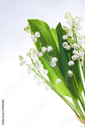 biale-kwiaty-lilie-doliny-na-bialym-tle
