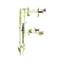 Floral Watercolor Letter F