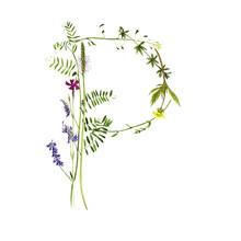 Floral Watercolor Letter P