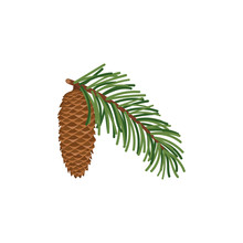Pine Branch With Green Cone Is...
