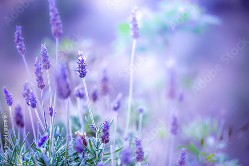 Foto op Canvas Lilac Lilac lavanda flowers. Vintage pink lilac photo with warm unusual colors