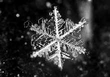 White Snowflake On A Black Background