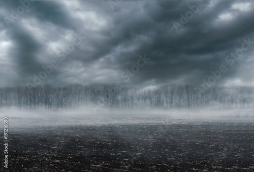 Poster Taupe Gloomy landscape - scorched earth, fog and dark forest