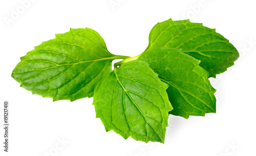 fresh herb, green peppermint isolated on white #191217410