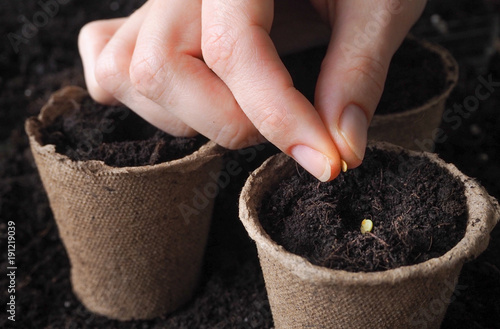 Planting seeds in the ground. Close up.