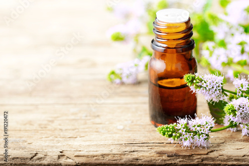 Fototapeta fresh purple Peppermint flowers and Peppermint essential oil on the wooden table obraz