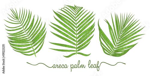 Photo Leaves of areca palm elements set