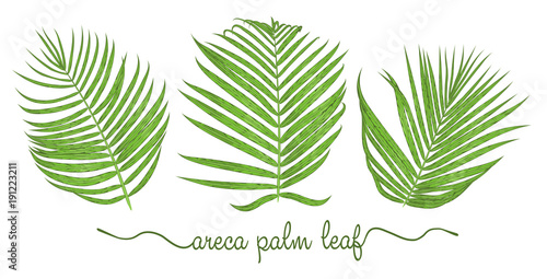Leaves of areca palm elements set Wallpaper Mural