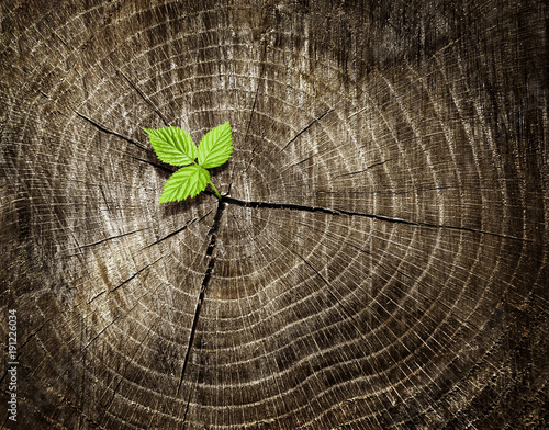 New young sprout growing from old wood tree stump. Renewal concept showing regeneration and rebirth. Dark tree rings background. Fototapete