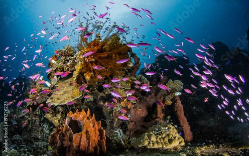 Staande foto Koraalriffen Coral Reef