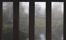 Close-up Of Wet Spider Web By ...