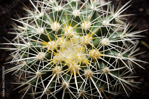 Tuinposter Cactus Overhead view of cactus