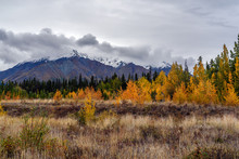 Amazing Fall Colors In Kluane National Park And Reserve In Yukon Territory Along Alaska Hwy