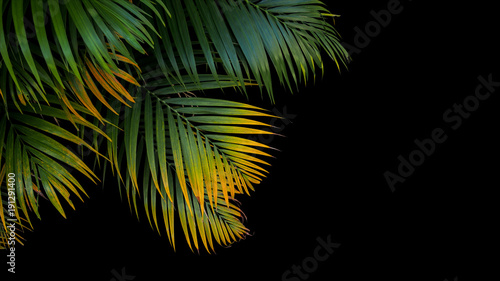 Foto  Tropical palm leaves, green and yellow palm fronds on black background