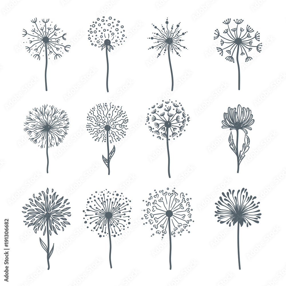 Fototapety, obrazy: Tender wild dandelion in all phases of blooming