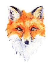 Hand Drawn Watercolor Red Fox ...