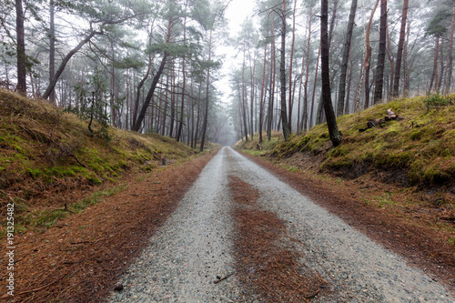 Tuinposter Weg in bos Gęsta mgła w lesie w Polsce