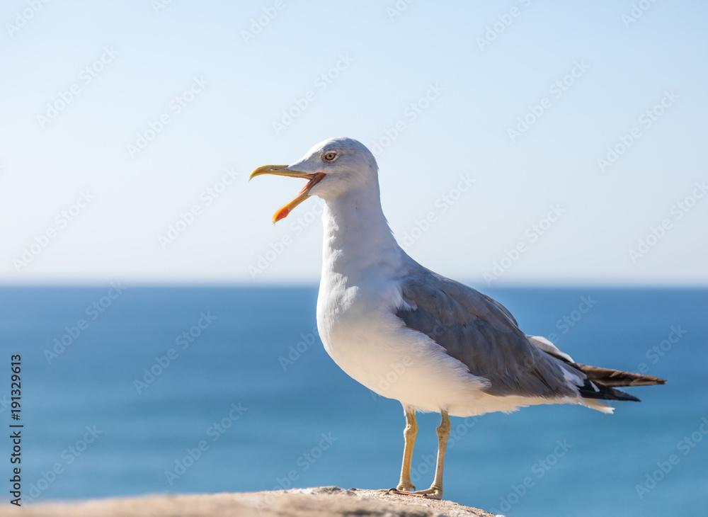 Seagull standing against blue sky