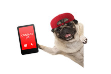 Frolic Pug Puppy Dog With Red ...