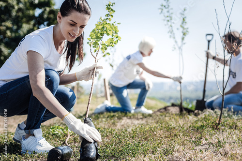 Eco protection. Nice young attractive woman wearing gloves and holing a tree while intending to plant it