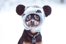 Funny Puppy, A Dog In A Winter...