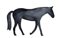 Watercolour Horse Silhouette. ...