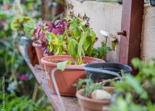 Garden Pots Sitting On Wooden Table Growing Green Fruits And Vegetables Colorful Herbs Soil Inside Flower Pot With Organic Seeds Key For Healthy