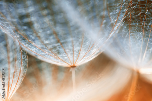Foto auf Gartenposter Lowenzahn delicate fluffy dandelion flower seeds reach out to the blue sky on a Sunny day
