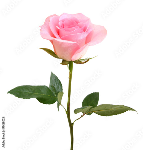 Recess Fitting Roses Pink Rose