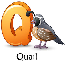 Letter Q Is For Quail Bird Car...