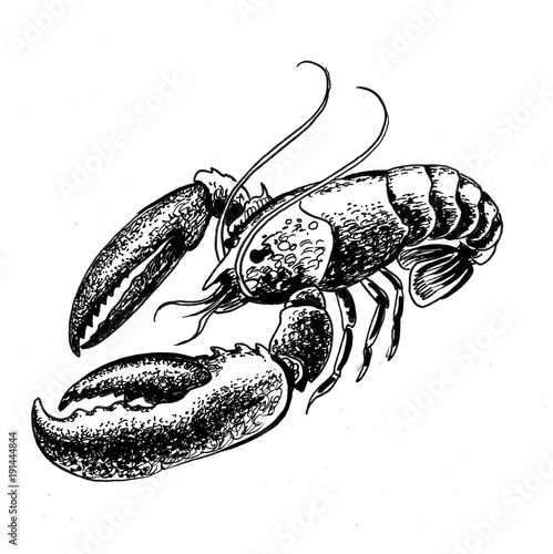 Black and white drawing of a lobster