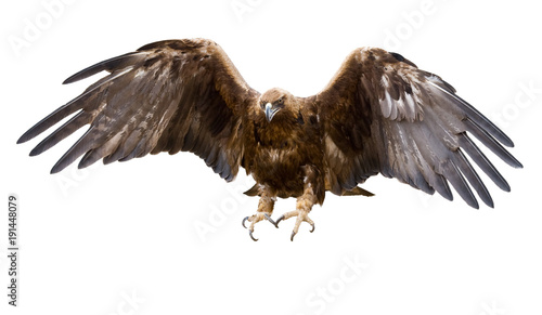 Deurstickers Eagle golden eagle, isolated