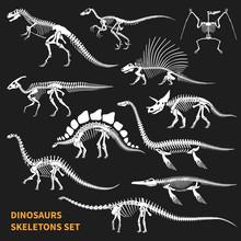 Dinosaurs Skeletons Chalkboard...