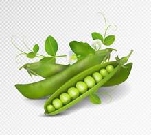 Vector Green Peas. Photo-reali...