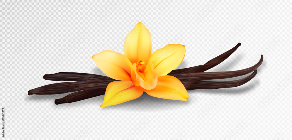 Fototapeta Realistic vanilla flower and pods, vector isolated objects on transparent background